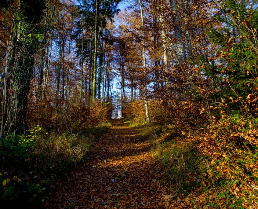 Anfahrt - Weg zum Aussichtpunkt Starnberg